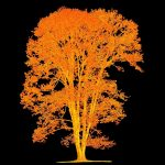 Kolekcja dendrologiczna Arboretum – Ośrodka Badań  Dendrologicznych